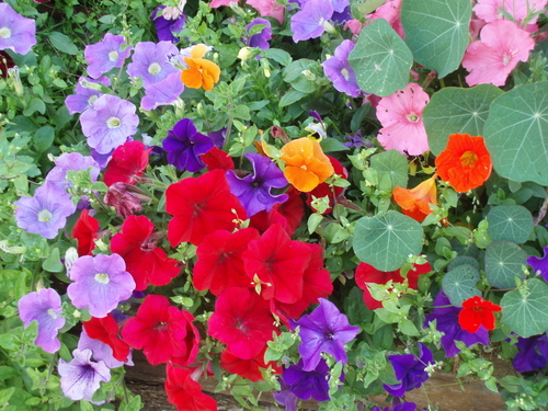 flowers in Haysham