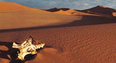 Desert_copy