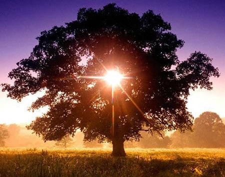 Sun_in_tree